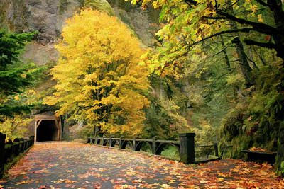 Photograph - Fall Colors Oneonta Gorge Tunnel by Wes and Dotty Weber