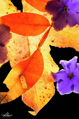 Photograph - Fall Colors by Philip Rispin