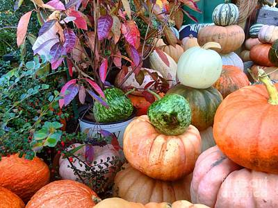 Photograph - Fall Colors Pumpkins And Gords 7 by Edward Sobuta
