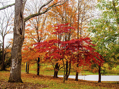 Photograph - Fall Colors by Randy Sylvia