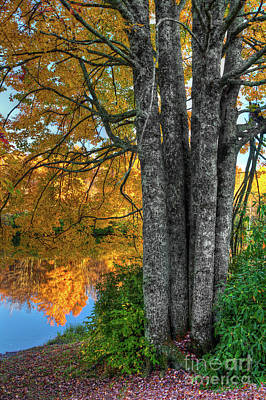 Photograph - Fall Colors Reflecting In A Blue Ridge Lake by Dan Carmichael