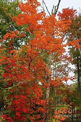 Photograph - Fall Colors by Sandra Updyke