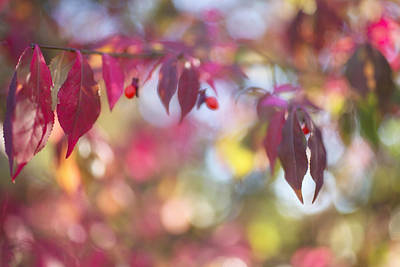 Photograph - Fall Colors by Susan Stone