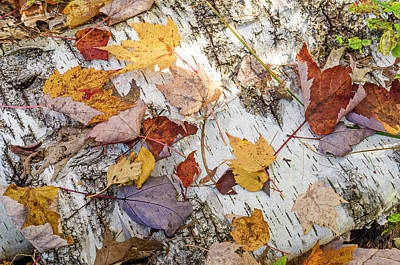 Photograph - Fall Colors by Thomas Pettengill