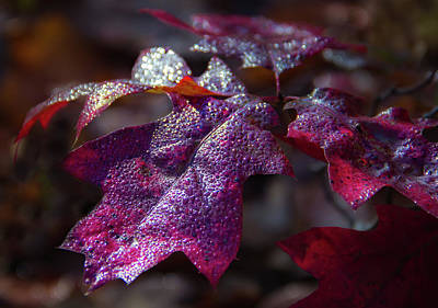 Photograph - Fall Colors by William Makris