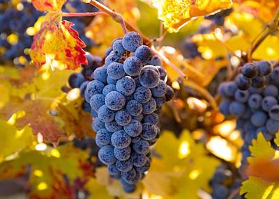 Photograph - Fall Colors With Grapes by Lynn Hopwood