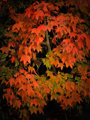 Photograph - Fall Colours 1 by Dorothy Berry-Lound