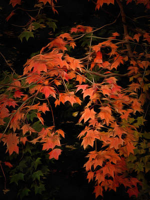 Photograph - Fall Colours 2 by Dorothy Berry-Lound