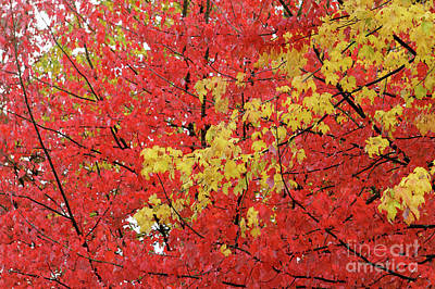 Photograph - Fall Colors Vancouver 1 by John  Mitchell