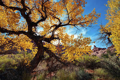 Fall Comes To Arches Print by Jeff Clay