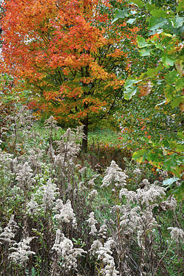 Photograph - Fall Comes To Veteran's Acres In Mchenry County by Ray Mathis