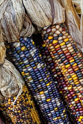 Fall Corn Art Print
