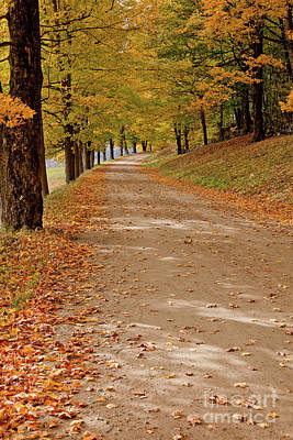 Photograph - Fall Country Road by Butch Lombardi