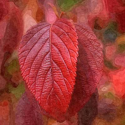 Photograph - Fall Crimson by Nick Kloepping