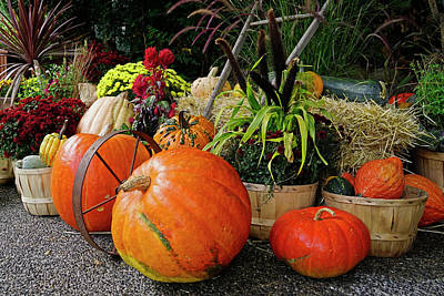 Photograph - Fall Display by Inge Riis McDonald