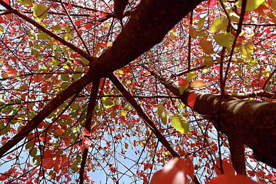 Photograph - Fall Dogwood New Perspective by Michele Myers
