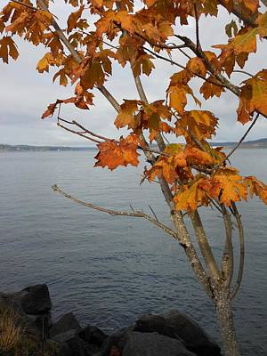 Photograph - Fall Embrace by My Lens and Eye - Judy Mullan -