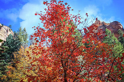 Photograph - Fall Explosion On The West Fork Trail In Sedona by Lynn Bauer