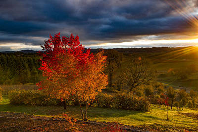 Photograph - Fall Fading Light by Jean Noren