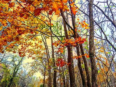 Photograph - Fall Fantasy by Michael Oceanofwisdom Bidwell