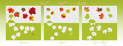 Digital Art - Fall Fell Fallen Triptych Poster by Robert J Sadler