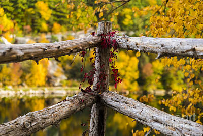 Photograph - Fall Fences At Mohonk Mountain by Alissa Beth Photography
