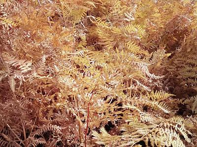 Photograph - Fall Ferns  by Debra Baldwin