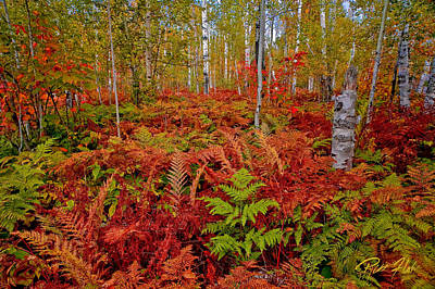 Photograph - Fall Ferns by Rikk Flohr