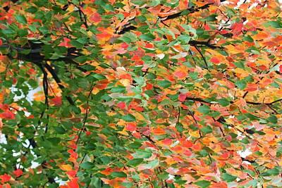 Fall Festivities Art Print