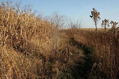 Photograph - Fall Field Break by Dylan Punke