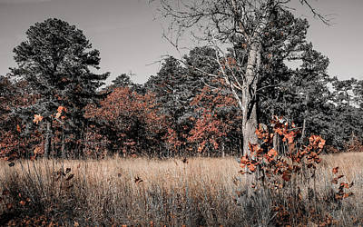 Photograph - Fall Field Fun by Glenn DiPaola