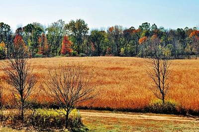 Photograph - Fall Fields by Michelle McPhillips