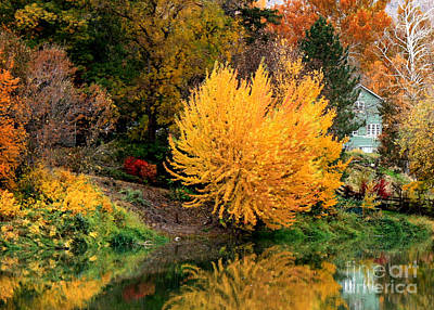 Of Autumn Photograph - Fall Fireworks by Carol Groenen