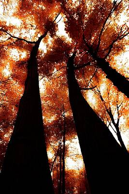 Photograph - Autumn Canopy Abstract 2 by Karl Anderson