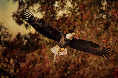 Photograph - Fall Fishing 2 Bald Eagle Art by Jai Johnson