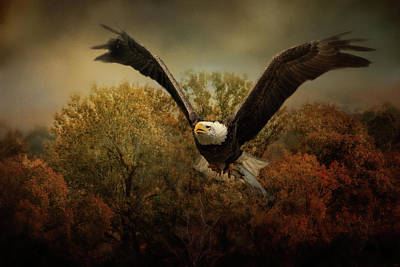 Photograph - Fall Fishing Bald Eagle Art by Jai Johnson