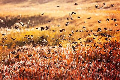 Fall Flock Print by Todd Klassy