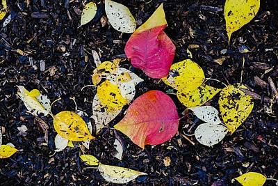 Photograph - Fall Floor by Desmond Raymond