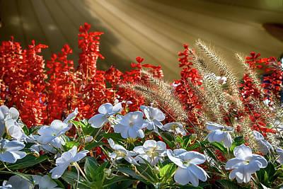 Photograph - Fall Florals by John Haldane