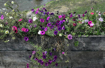 Photograph - Fall Flower Box by Joanne Coyle