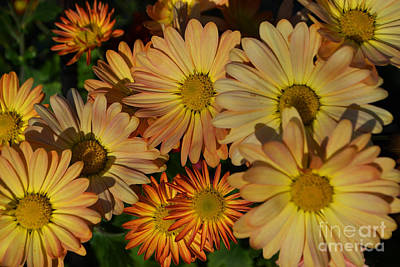 Fall Flowers In Madison  Art Print by Amy Lucid