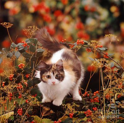 Photograph - Fall Fluff by Warren Photographic