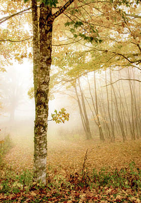 Photograph - Fall Fog In Virginia by Tracy Winter