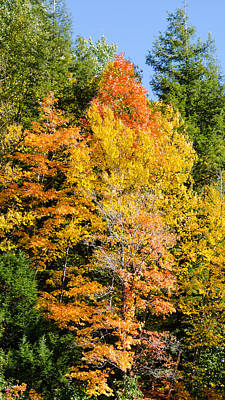 Photograph - Fall Foliage 2 by Kristin Hatt
