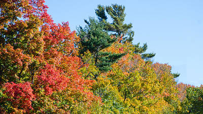 Photograph - Fall Foliage 3 by Kristin Hatt