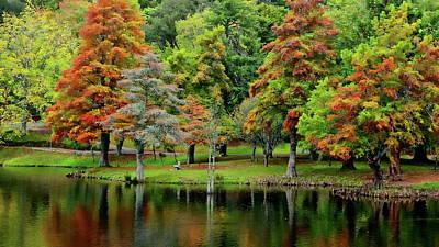 Photograph - Fall Foliage by Anthony Dezenzio