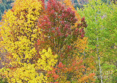 Photograph - Fall Foliage Colors by Alan L Graham