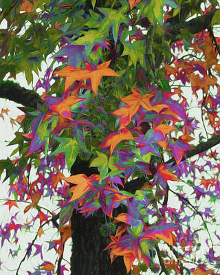 Photograph - Fall Foliage - Colors Of The Gumball Tree by Scott Cameron