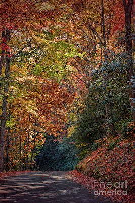 Photograph - Fall Foliage by Dave Bosse
