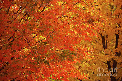 Photograph - Fall Foliage by Deb Halloran